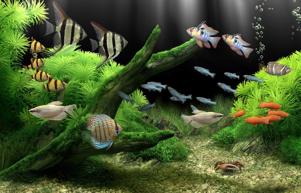 Ενυδρείο με ψάρια