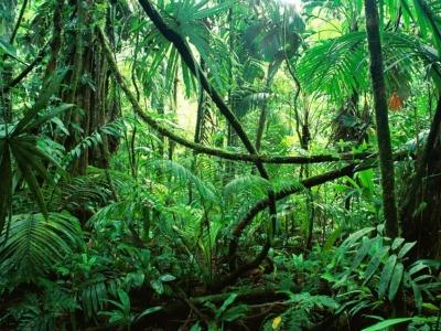 Το δάσος του Αμαζονίου