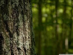 Φιλτράρισμα νερού με ξύλο δέντρου