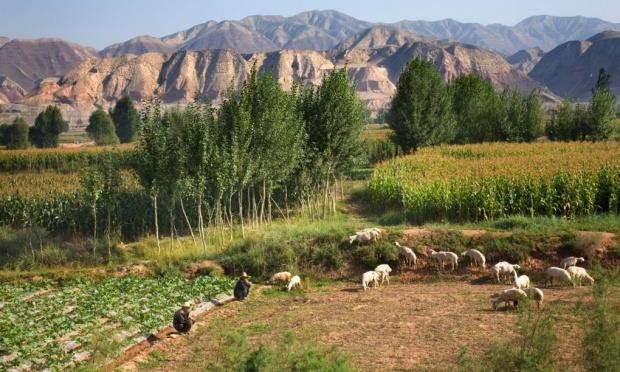 καλλιέργειες στην Κίνα